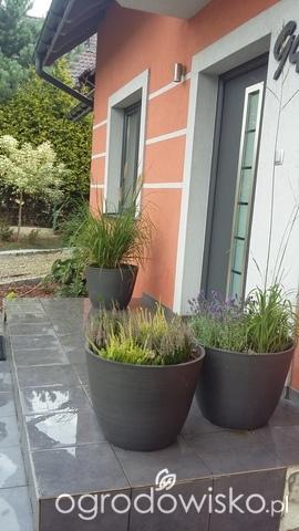 Rodzaje Donic Strona 27 Forum Ogrodnicze Ogrodowisko