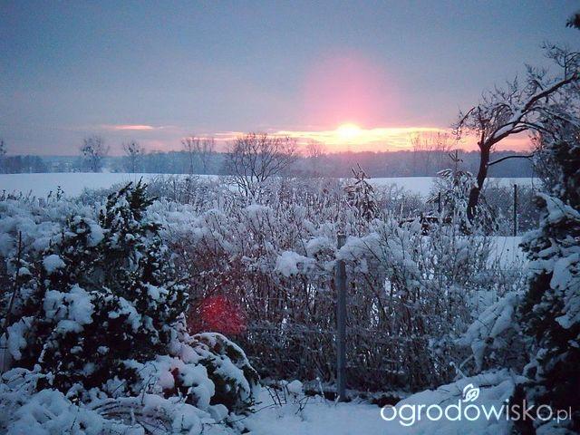 Pamiętajcie O Ogrodach Strona 55 Forum Ogrodnicze
