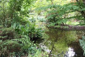 Ogród bagienny. Nad wodą zwieszają się gałęzie drzew