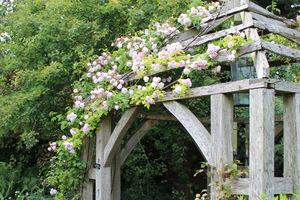 Okrywanie róż pnących to wielkie wyzwanie dla ogrodnika, ponieważ te róże osiągają znaczne rozmiary. Raczej niemożliwe jest odpięcie ich z podpór i przyginanie do ziemi