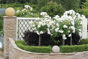 Jednym ze sposobów okrywania róż piennych  jest wykopanie odpowiednio długiego i głebokiego rowu, ułożenie róży poziomo w rowie, a następnie przysypanie całości ziemią