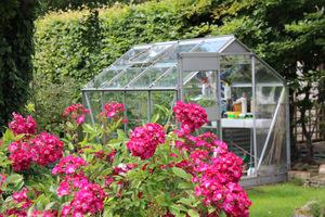 Taka chłodna szklarenka może się przydać do przechowywania różnych roślin, nie tylko róż w donicach