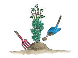 Wysokie róże związujemy, nakładamy walec lub gałązki iglaste, a na nasadę pędów usypujemy kopczyk