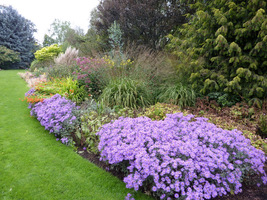 Ogród z przewagą bylin (roślin zielnych wieloletnich), które rosną w ogrodzie od wielu lat także wymaga pracy. Możemy podzielić w tym czasie większość roślin i przesadzić w inne miejsca w ogrodzie