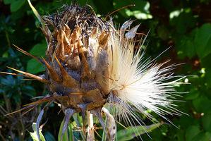 Na rabatach należy przycinać wiele bylin do wysokości około 10 cm nad ziemią. Niektóre jednak wyglądają zimą bardzo atrakcyjne