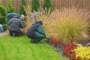 Sprzątanie ogrodu zaczynamy od usunięcia chwastów jednorocznych, a z krzewów i drzew, usuwamy chore liście