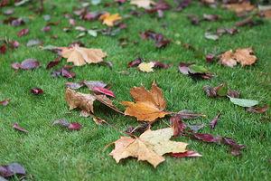 Trawniki kosimy jesienią ostatni raz, grabimy dokładnie z wszelkich liści i zanieczyszczeń. Pozostawione na powierzchni trawnika, spowodują jego gnicie i zamieranie