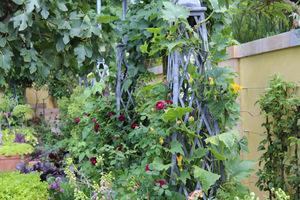Na tych okazałych obeliskach metalowych rosną róże i pną się ozdobne dynie