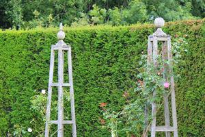 Stare obeliski drewniane z pnącymi różami