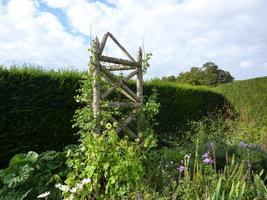 Mocny obelisk wykonany z grubych nieokorowanych żerdzi wytrzyma znaczny ciężar roślin
