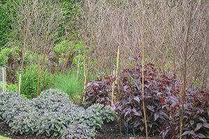 """W swoim ogrodzie, jak tutaj w angielskim  najczęściej stosuję """"wachlarze"""" z drzew - czyli rozgałęzione gałązki. Najlepsza jest leszczyna, lipa, czeremcha, grab"""
