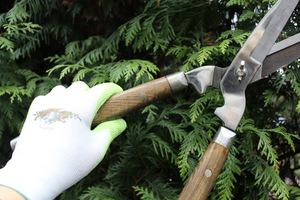 Narzędzia ogrodnicze dobrej jakości są koniecznością dla każdego ogrodnika - artysty. Na zdj. doskonałe nożyce szpalerowe Joseph Bentley