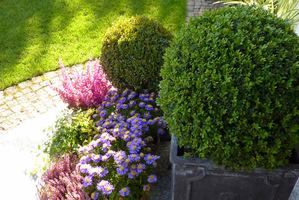 Kule bukszpanowe w donicach to całoroczna ozdoba, wymieniane są tylko rośliny sezonowe