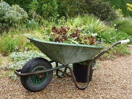Chwasty wywozimy na kompost