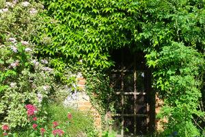 Pnącza podkreślają wejście do ogrodu i sprawiają, że staje się bardziej tajemniczy