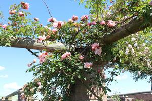 Róże na podporach