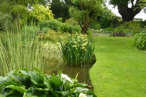 Irysy w ogrodzie Beth Chatto