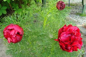 Kwiaty w rozkwicie, fot. Łucja Badarycz