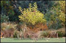 Header nowozelandzkie jesieni   1