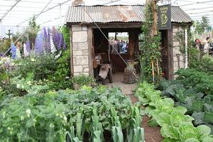 Pokazowy warzywnik na Wystawie Chelsea Flower Show