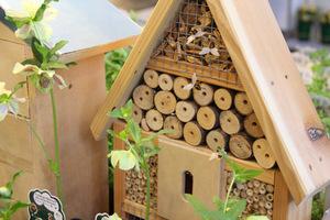 Owady lubią też otwory w drewnie, wiązki trzciny i szyszki