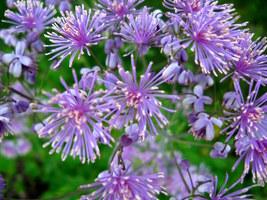 W każdym kwiatku może być kilkadziesiąt pręcików