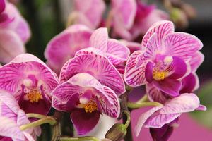 Kwiaty z bogatym unerwieniem, fot. Danuta Młoźniak