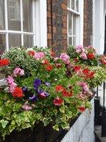 Skubiemy przekwitnięte kwiatki w skrzynkach balkonowych. Zmusza to rosliny do wytwarzania nowych kwiatów