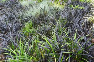 Gobelin konwalnika, liriope i kostrzewy sinej