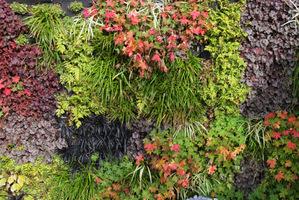 Przepiękne zestawienie roślin. Polecam wszystkim żurawki, konwalniki i inne rośliny o kolorowych, zimozielonych liściach