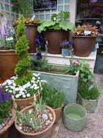 W pojemnikach możemy posadzić również byliny ozdobne z liści