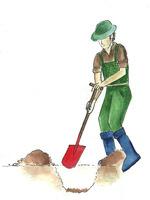Kopiemy dół dwa razy szerszy od średnicy bryły korzeniowej. Zruszamy szpadlem lub widłami boki i dno dołka, aby rozrastające się korzenie mogły łatwiej wnikać do gruntu