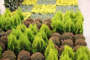 Sadzenie krzewów i drzew to jedna z najważniejszych czynności w ogrodzie.