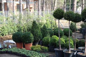 Dorodne rośliny będą lepiej rosły, gdy właściwie przygotujemy im podłoże