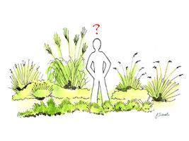 Jak rozmnożyć trawy ?