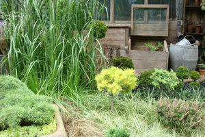 Trawy nie mają specjalnych wymagań, zawsze możemy wybrać coś odpowiedniego z szerokiej gamy gatunków i odmian