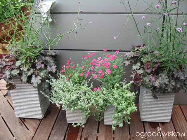 Ratowanie Roslin Balkonowych Po Urlopie Ogrodowisko