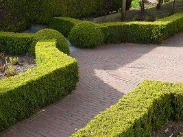 Bukszpany tworzą strukturę ogrodu