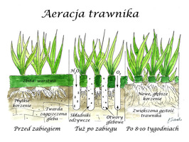 Aeracja trawnika - przekrój