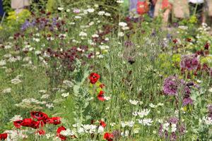 Lekkie kwiatowe łączki w charakterystycznej dla tego projektanta, fioletowo-czerwono-niebiesko-biało-zielonej kolorystyce