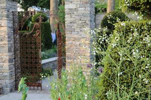 Brama z zardzewiałego metalu, a po prawej Crambe cordifolia