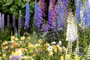 Galeria ostróżek na wystawie Chelsea Flower Show