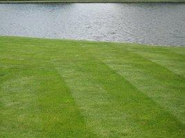 Idealny trawnik ma idealne podlewanie