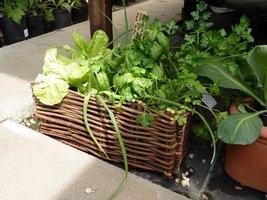 Zioła i warzywa w wiklinowym koszyku