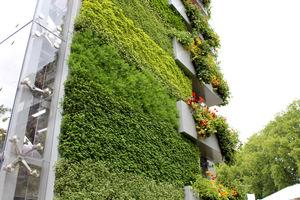 Ziołowa, pionowa ściana to najnowsza technologia w ogrodnictwie (Chelsea Flower Show 2011)