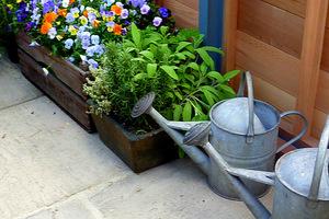 Konewki stale pod ręką, bowiem zioła świeżo posadzone wymagają systematycznego podlewania