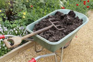 Kompostem warto wzbogacić każdą rabatę nie tylko przed sadzeniem roślin, ale także ściółkując glebę