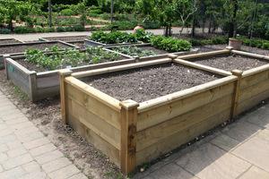 W zależności od tego, jakie warzywa uprawiamy, głębokość warstwy urodzajnej powinna wynosić od 20 do 50 cm