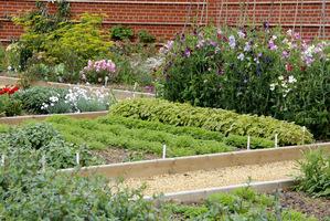 Rośliny na nawóz zielony szybko rosną i pokrywają glebę, eliminują chwasty, poprawiają strukturę gleby, zapobiegając dodatkowo erozji
