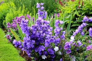 Jesień to doskonały czas, aby poprawić zdrowotność gleby w naszym ogrodzie